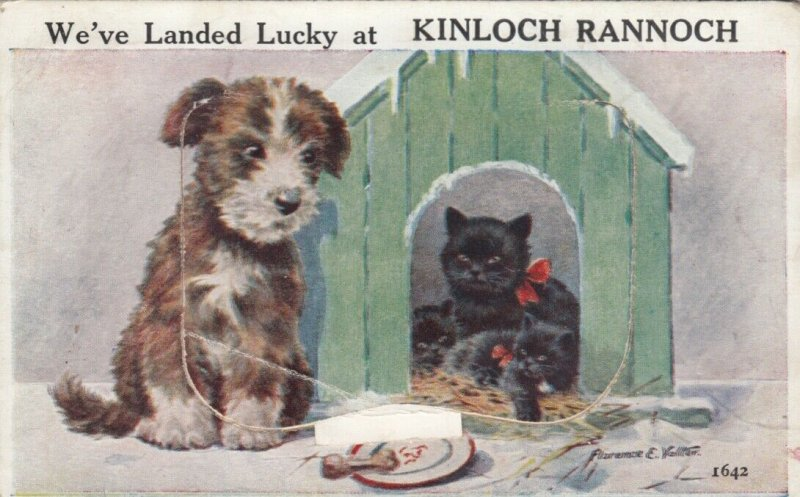 Dog & Black Cats , 1933 ; At KINLOCH RANNOCH