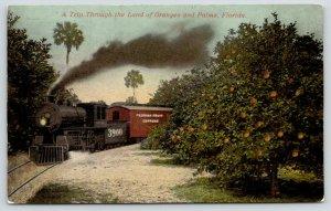 Florida~Florida Fruit Express Steam Train Through Orange Grove~c1910