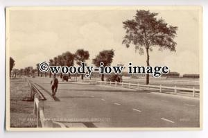 tp8962 - Great North Road , Doncaster Racecourse , Yorkshire - postcard
