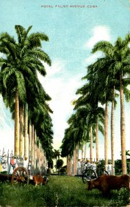 Cuba - Royal Palms Avenue
