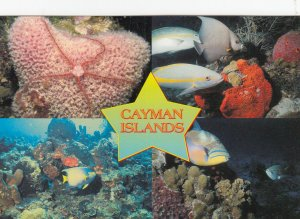 Cayman Islands , B.W.I. , 1950-70s ; Underwater