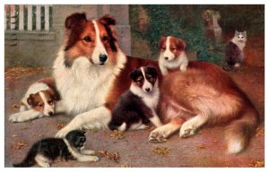 Dog ,    Collie Mother with Puppies