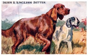 Dog  , Irish and English Setter