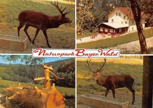 Naturpark Bayerischer Wald Zwiesel Brunnen Fountain Forest Deer