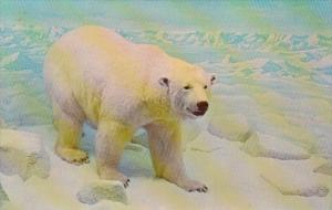 New York Long Island Centerport Polar Bear Vanderbilt Museum