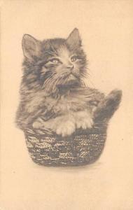 Cat in Basket Cat Unused