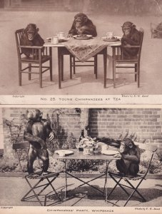 Chimpanzees Tea Party Whipsnade & London Zoo 2x Antique Postcard s