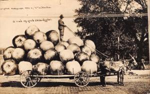 A LOAD OF OKLAHOMA APPLES~WM H MARTIN REAL PHOTO POSTCARD 1910~EXAGGERATION