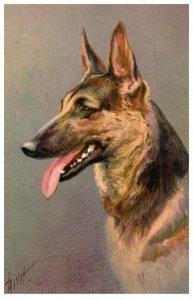Dog , Alsatlian Wolfhound ,  artist signed