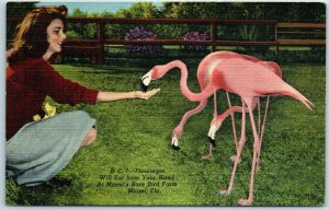 1948 Miami FL Postcard RARE BIRD FARM Flamingoes will Eat From Your Hand Linen
