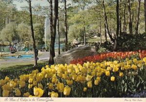 A Mass Of Tulips In The Terrace Garden Tuxedo New York