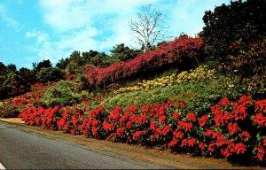 Hawaii Kona Coast Machado Gardens