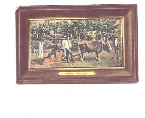 Two Women, Bullock Carr, Oxen, Mardeira Portugal