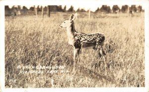 Pickerel Lake Wisconsin~Young Monarch: Deer Fawn~Swell Ideal Fishing~1937 RPPC