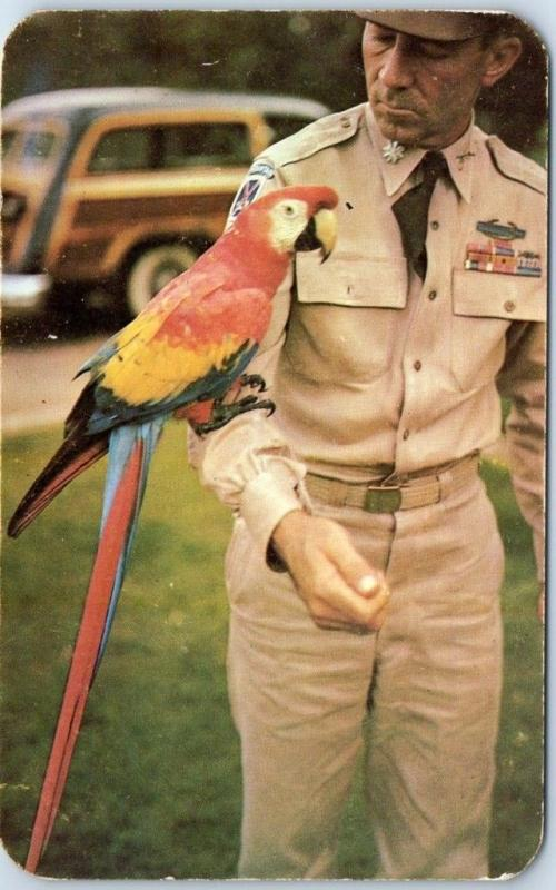 Vintage PANAMA Postcard MACAW PARROT w/ Canal Zone Air Mail Stamp c1950s