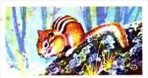 Brooke Bond Trade Card Asian Wildlife No 16 Siberian Chipmunk