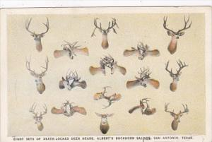 Texas San Antonio Eight Sets Of Death Locked Deer Heads Albert's Buckhorn Saloon