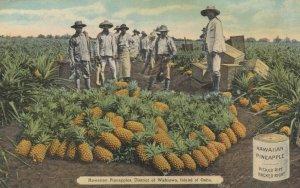 Pineapples , District of WAHIAWA , Island of Oahu , Hawaii , 1900-10s