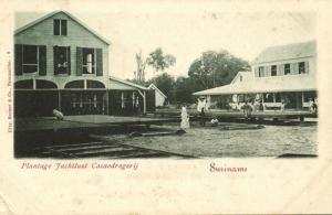 suriname, Cocoa Plantation Jachtlust, Drying Cacao (1899)