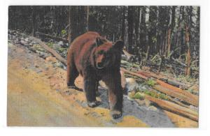 Yellowstone National Park Bear Hitchiker Vintage Curteich Animal Postcard
