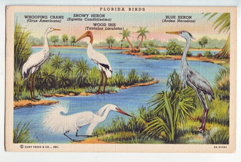 P1225 1941 linen used view postcard florida water birds