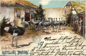 south africa, TRANSVAAL Ausstellung Expo, Ostrich Farm (1900) Postcard