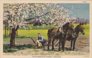 Arkansas Greetings From Conway Farmer With Horses and Plow 1937 Curteich