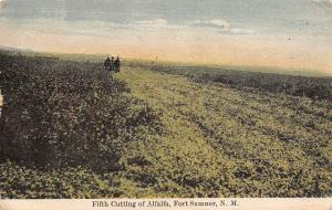 Fort Sumner New Mexico~Horses Pull Farm Implement~Fifth Alfalfa Cutting~1911 PC