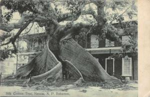 Nassau Bahamas Silk Cotton Tree Antique Postcard J79266