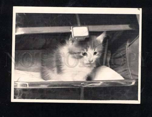 014525 Charming KITTEN in Basket Old REAL PHOTO