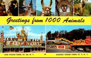 New York Lake Placid & Ausable Chasm Greetings From Sterling-Alaska Fur & Gam...
