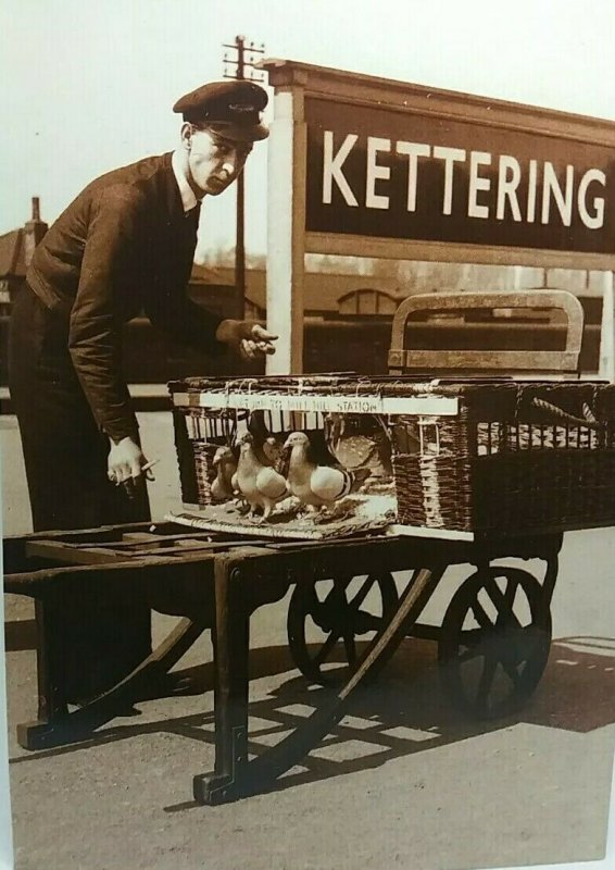 Postcard Porter with Basket of Pigeons for Release at Kettering Railway Station