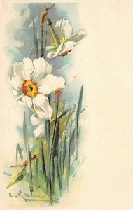 LP11   Catherine Klein Flowers Floral Postcard Artist Signed White Flower