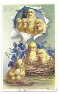 Tuck Easter Postcard Chicks One Black Vintage Embossed