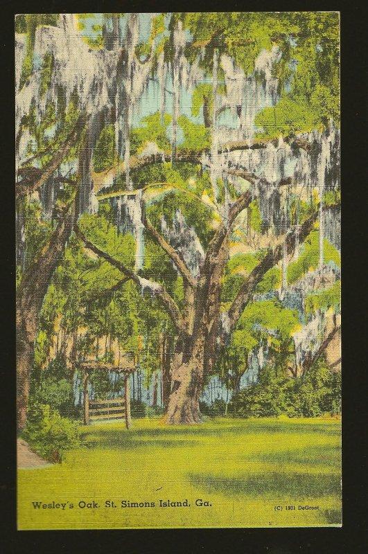 USA Wesley's Oak St. Simons Island Georgia Linen Postcard