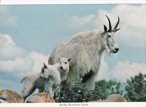 Canada British Columbia Rocky Mountain Goats