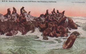 California San Francisco Seals On The Rocks Near Cliff House