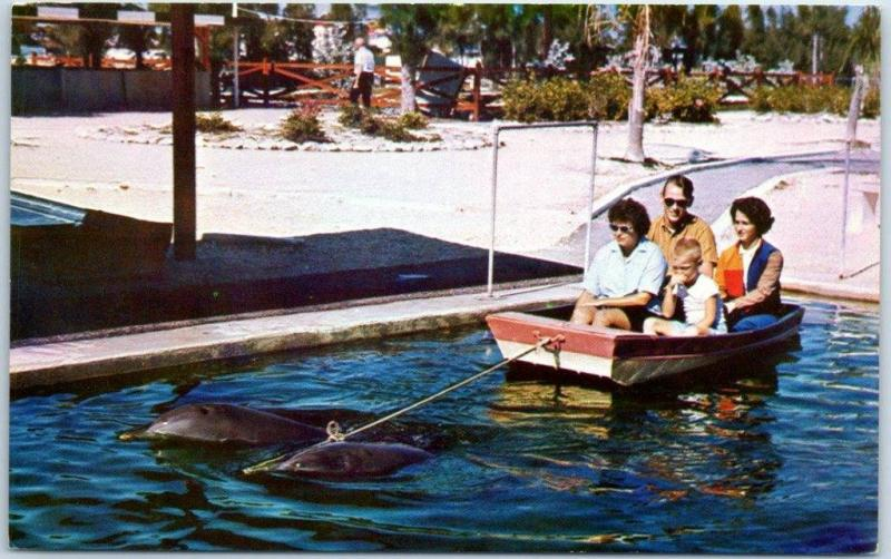 Islamorada Florida Postcard THEATRE OF THE SEA Porpoise Pulling Boat c1970s