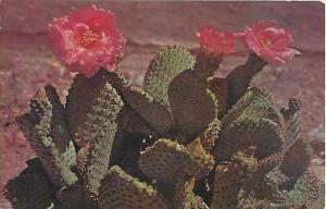 Magenta Beaver Fall Cactus, Chrome