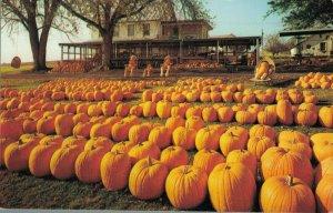 USA Pennsylvania Dutch Farm Market Heart of Dutchland 03.76