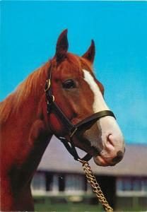 Brown horse high quality Kruger Publishing postcard animals topical