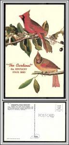 Kentucky State Bird The Cardinal - [KY-003]