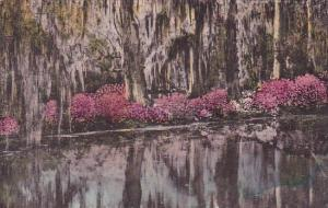 Magnolia Gardens Charleston South Carolina Handcolored Albertype