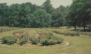 ORANGEBURG, South Carolina, 40-60's; Rose Garden, Edisto Memorial Gardens