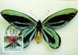 Papua New Guinea, PNG, Queen Alexandra's Birdwing Butterfly Postcard (1988)