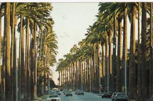 California Palm Springs Palm Lines Street 1997