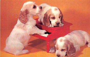 Three off beats Dog Unused
