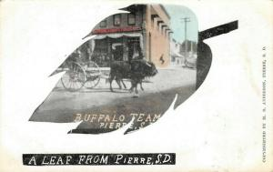 A Leaf from Pierre South Dakota~Buffalo Team~Gents Furnishings Store~1908 PC