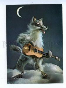 196935 RUSSIA wolf guitarist by Kupriyanov old postcard