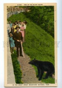 157784 BLACK BEAR Great Smoky Mountains National Park Vintage